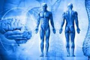 регенерация-организма